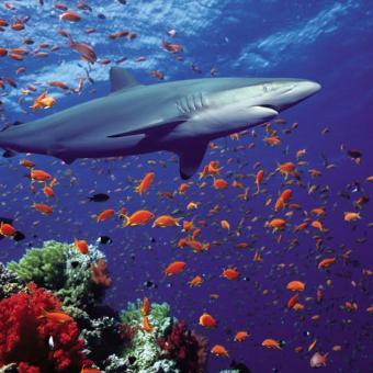 https://indiantelevision.com/sites/default/files/styles/340x340/public/images/tv-images/2018/09/03/shark.jpg?itok=vaxs1Q2A
