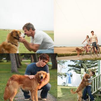 https://indiantelevision.com/sites/default/files/styles/340x340/public/images/tv-images/2018/09/04/Dog-Purpose.jpg?itok=FSrUeuv5