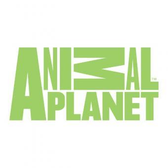 https://indiantelevision.com/sites/default/files/styles/340x340/public/images/tv-images/2018/11/14/animal-planet.jpg?itok=GK2QBFXl