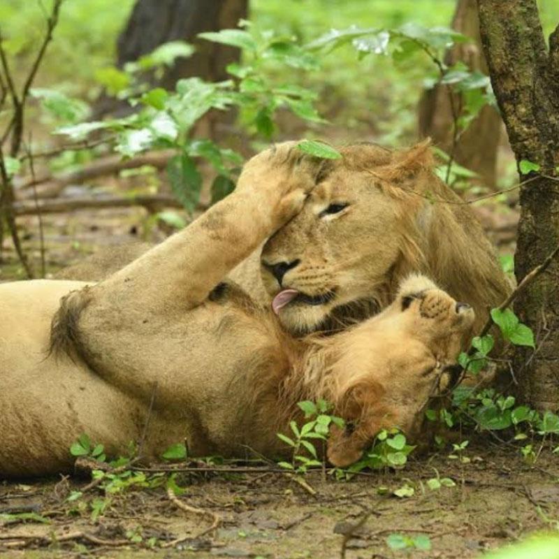 https://indiantelevision.com/sites/default/files/styles/smartcrop_800x800/public/images/tv-images/2020/01/21/animal.jpg?itok=sDhUB9Mm